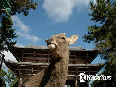 Discover Traditional Nara Walking Tour (Half day)
