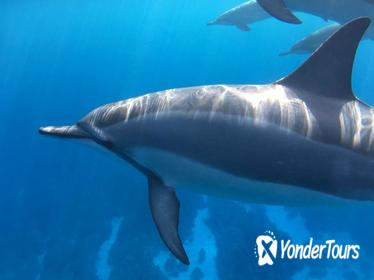 Dolphin Encounter and Kealakekua Bay Reef Snorkel