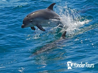 Dolphin watching in the wild - Half Day