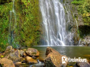 East Maui Waterfalls and Rainforest Hike with Hotel Pickup