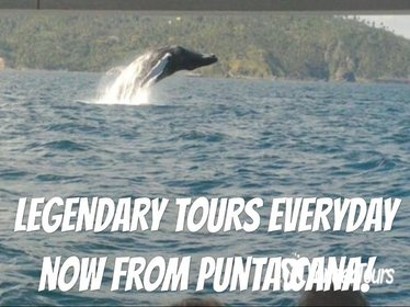 From Punta Cana: Famous Whale Samana and Cayo Levantado Beach with Whale Biologist