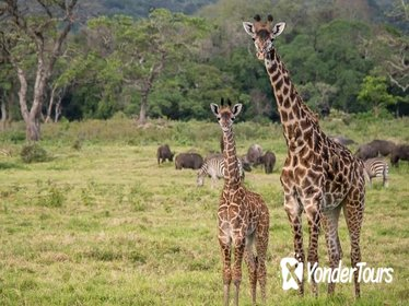Full- Day Arusha National Park Safari from Arusha