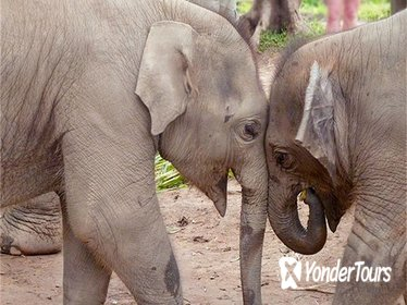 Full Day Elephant Nature Park Exploration from Chiang Mai