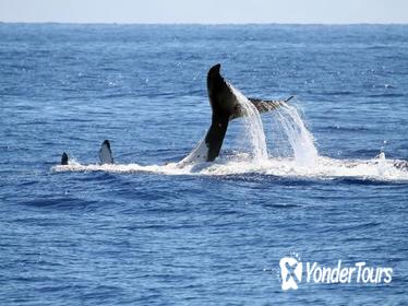 Full Day Whale Watching Tour in Hermanus from Cape Town