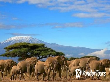 Full-Day Amboseli National Park Tour from Nairobi with Lunch