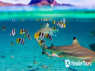 Full-Day Bora Bora Lagoon Cruise Including Snorkeling with Sharks and Stingrays