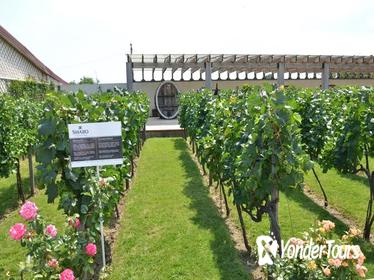 Full-Day Combo Tour from Odessa: Akkerman Fortress and Shabo Wine Center with Tasting
