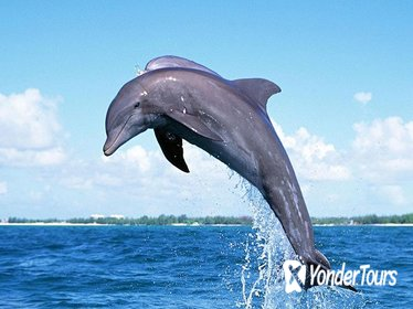 Full-Day Dolphin Watching Cruise in Mauritius