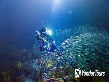 Full-Day Scuba Dive Charter to Little Barrier Island
