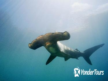 Full-Day Scuba Dive Charter: Hammerhead Experience from Warkworth