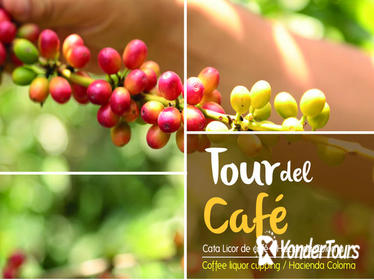 Full-Day Tour: Coffee Plantation -Hacienda Coloma- from Bogota