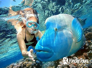 Glass Bottom Boat, Snorkel and Amazing Barrier Reef Explorer from Punta Cana