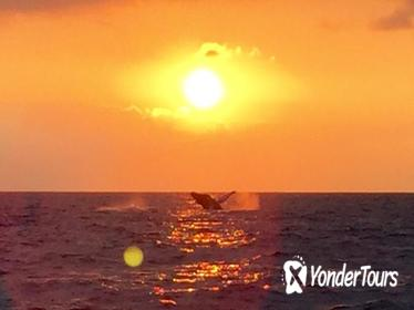 Guaranteed Whale Watch in Kona