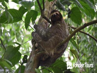 Guided Full-day Walking Rainforest Adventure with Lunch
