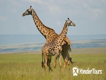Half Day Nairobi National Park Guided Tour From Nairobi
