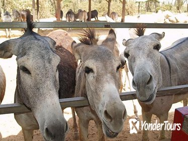 Half-Day Animal Sanctuary Tour in Aruba