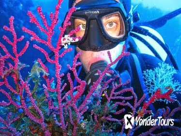 Half-day Boat Trip with Scuba Diving and Snorkeling in the Cyclops Sea