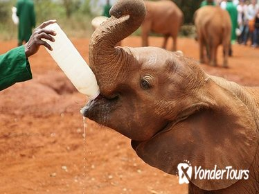 Half-Day David Sheldrick Wildlife Trust - Elephant Orphanage Tour from Nairobi