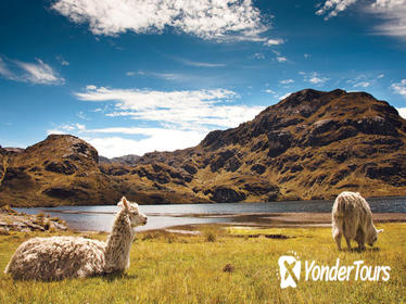 Hiking Tour through Cloud Forest and Cajas National Park from Cuenca, Ecuador