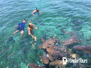Hol Chan Marine Reserve and Shark Ray Alley Snorkeling Tour