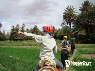 Horse Riding in Southern Morocco