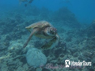 Introduction to Scuba Diving in Oahu from Waikiki