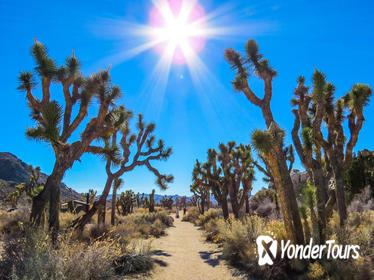 Joshua Tree National Park Customized Guided Hiking Tour