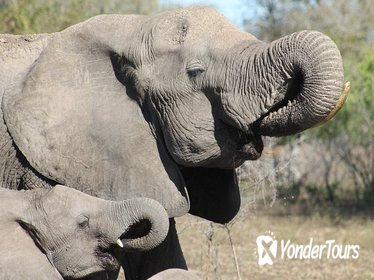 Kruger National Park Full Day Private Guided Safaris