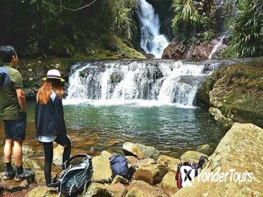 Lamington National Park Hiking Tour from the Gold Coast: Picnic Rock or Box Forest Falls