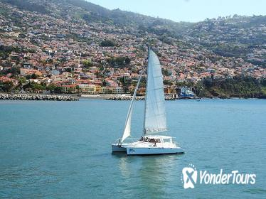 Madeira Dolphin and Whale Watching on a Luxurious Catamaran