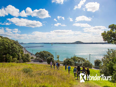 Maori Guided Walking Tour in Auckland