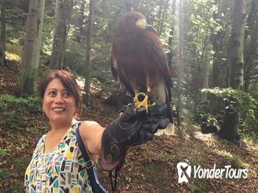 Medvednica Falconry Tour from Zagreb