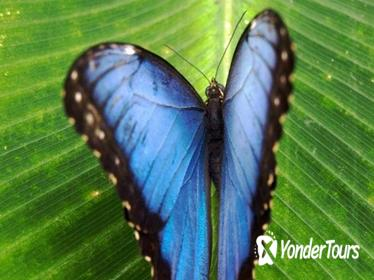 Monteverde Cloud Forest and Butterfly Garden from Guanacaste