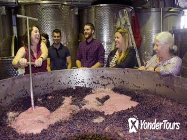 Mornington Peninsula Winery Tour Including Wine Tastings and 2-Course Lunch from Melbourne