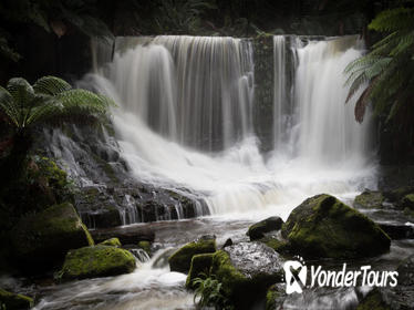 Mt Field National Park Including Russell Falls: Private Sightseeing and Photography tour from Hobart