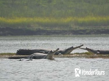 National Chambal Sanctuary and Alligator Day Tour from Agra