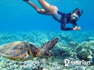 Oahu Grand Circle Tour with Snorkeling from Waikiki via Bus
