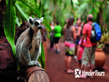 Oasis Park Entrance Ticket & Lemur Experience