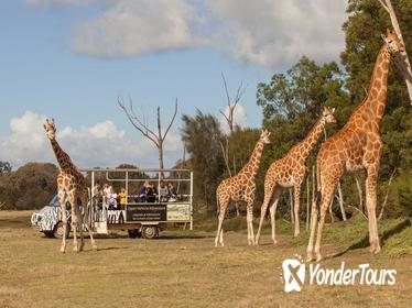 Off-Road Safari at Werribee Open Range Zoo