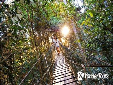 O'Reilly's Lamington National Park and Treetop Canopy Tour
