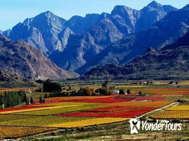 Paarl Valley Wines and Culture Bike Tour from Cape Town