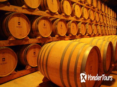 Palma de Mallorca Shore Excursion: Winery Visit and Wine Tasting Tour