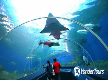 Pattaya Underwater World Tour with Hotel Transfers