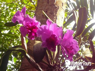 Phantasea Tropical Botanical Garden Admission in St Thomas