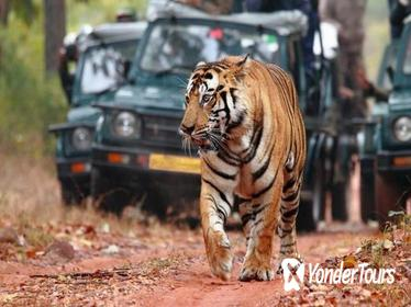 Private 07-Days Golden Triangle Tour with Ranthambhore Tiger Reserve from Delhi