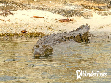 Private Crocodile Tour from the Riviera Maya