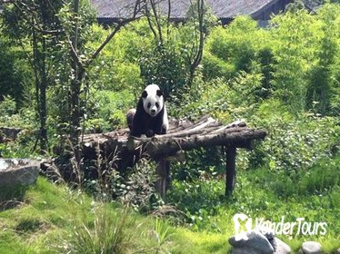 Private Day Tour: Dujiangyan Panda Base and Irrigation Project