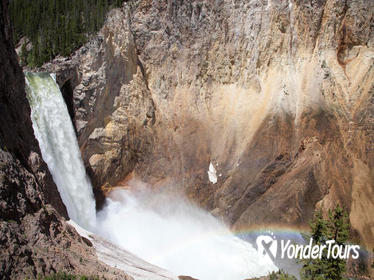 Private Full-Day Yellowstone Wildlife Tour from Jackson Hole