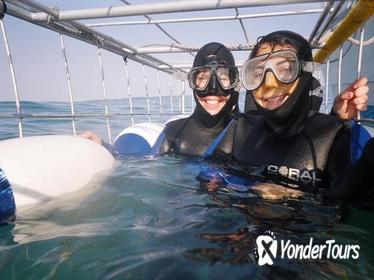 Private Great White Shark Cage Diving and Wine Tasting Experience from Cape Town