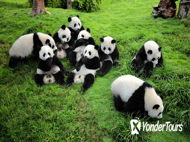Private Tour: Chengdu Panda Breeding and Research Center Tour